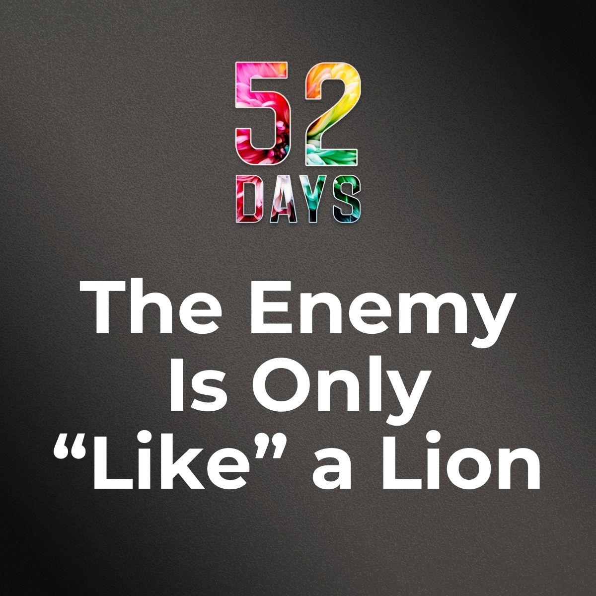 52_TILE_VIDEO_LION